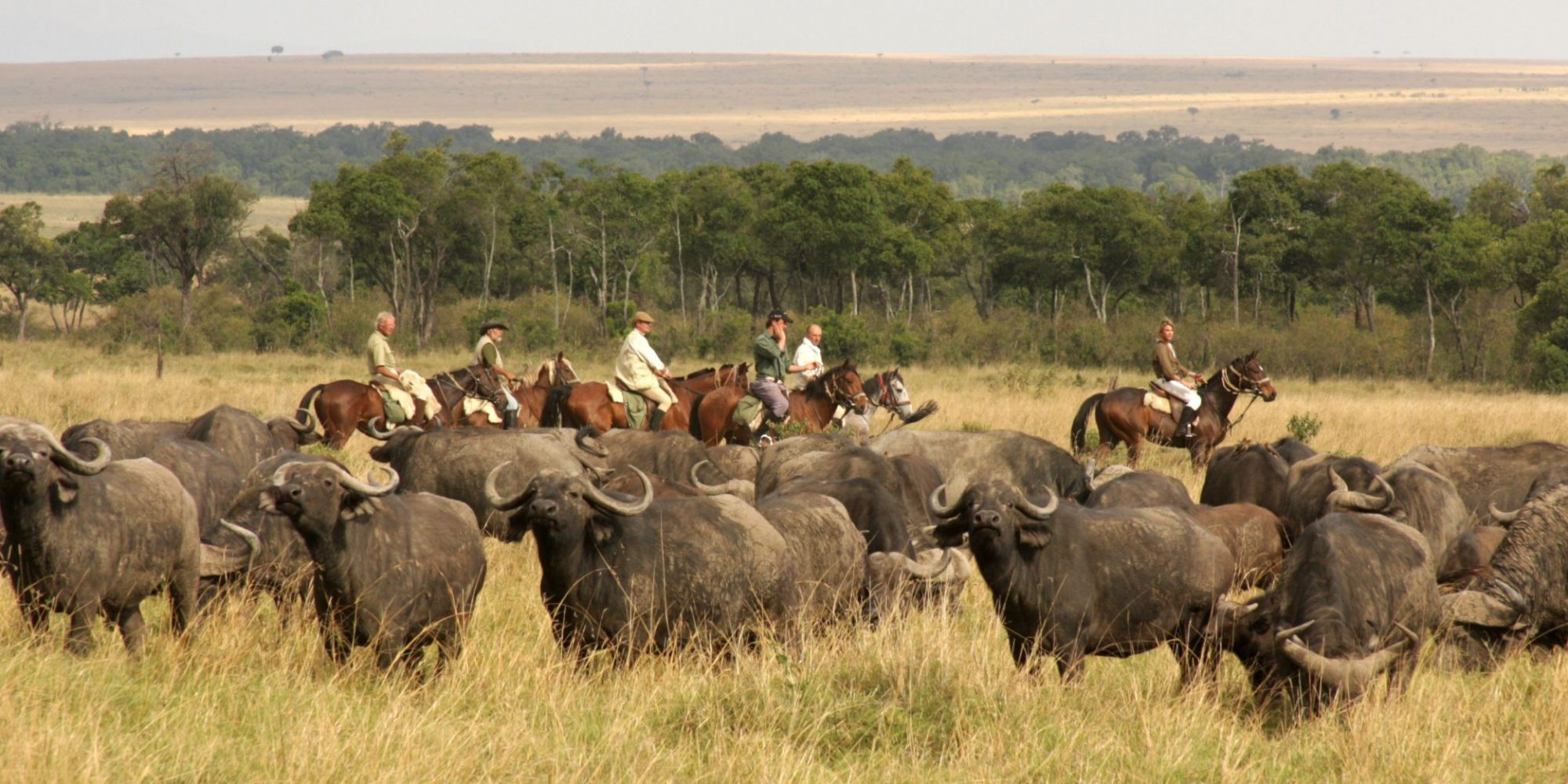 Offbeat Safaris - Riding with buffalo in the Masai Mara